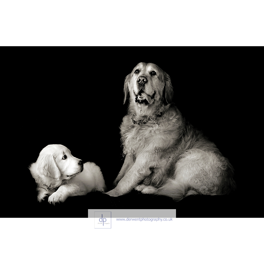 merit award, pets portraiture category,