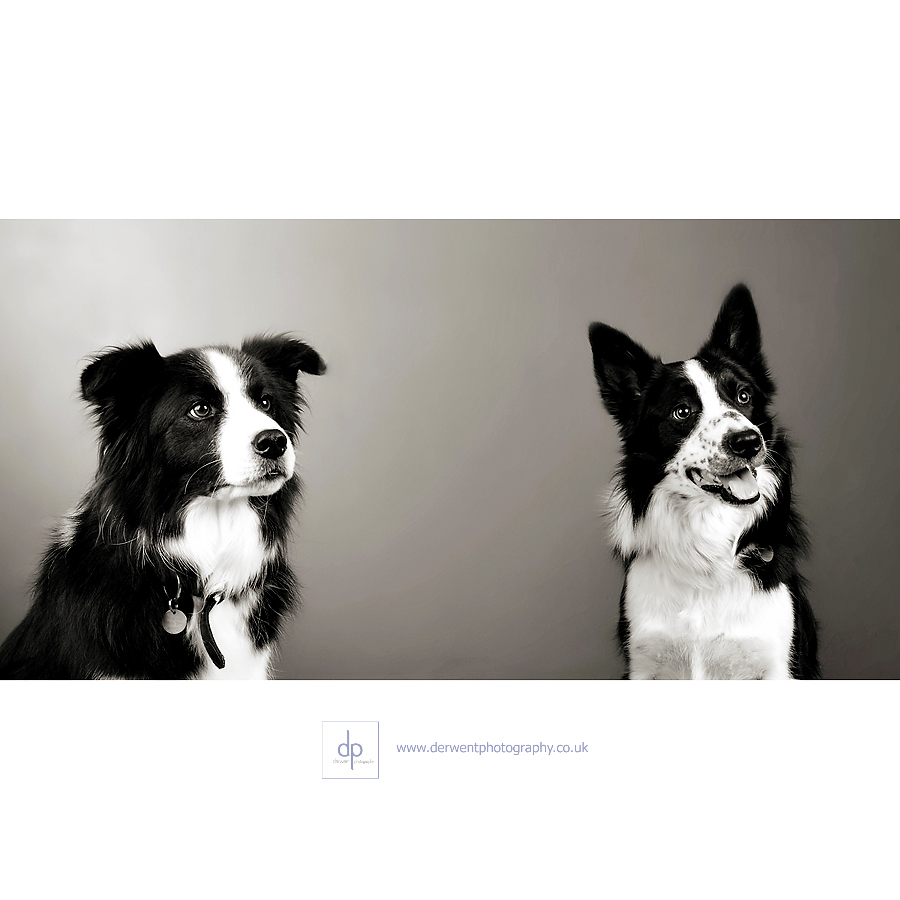 merit award, pets portraiture category,