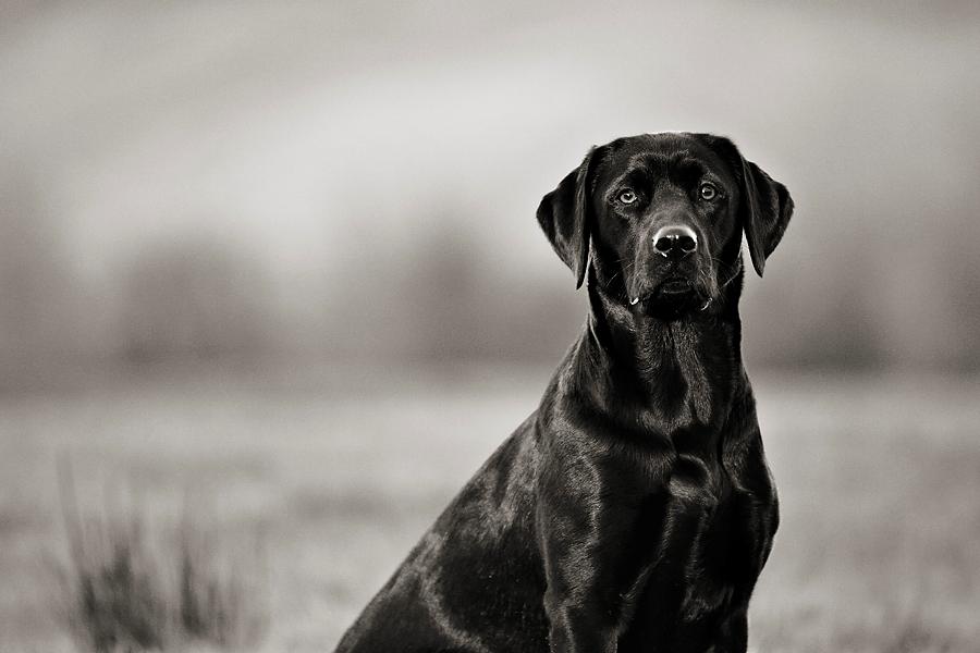 Pet Portraits gold award