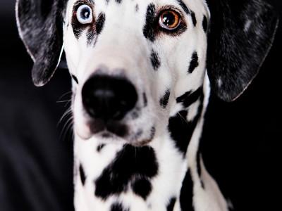 Stella's pet portraits