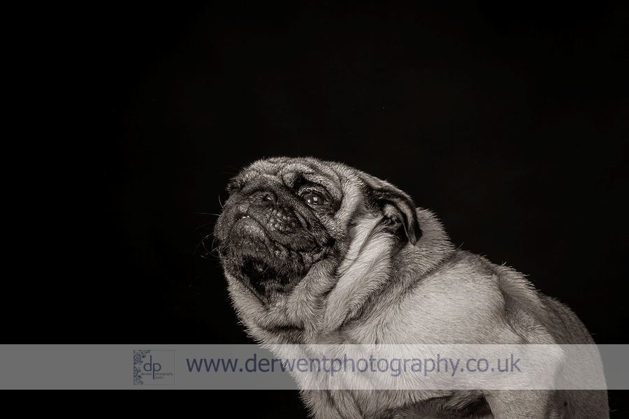 lake district dog photography