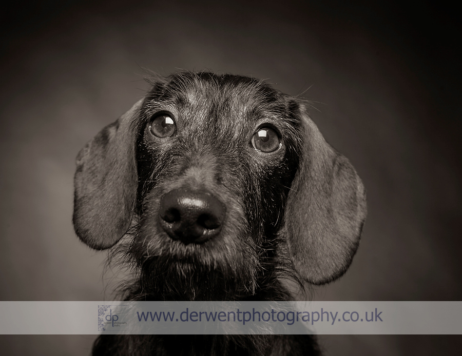 dog photography lake district