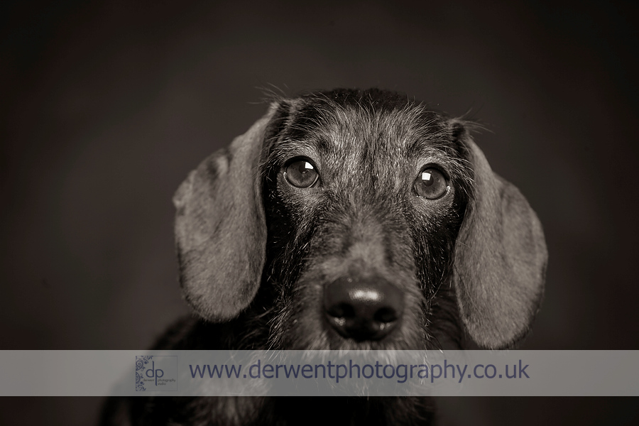 dog photographer cumbria