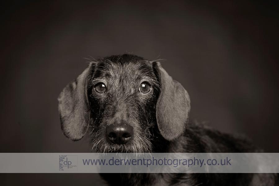 dog photographs lake district