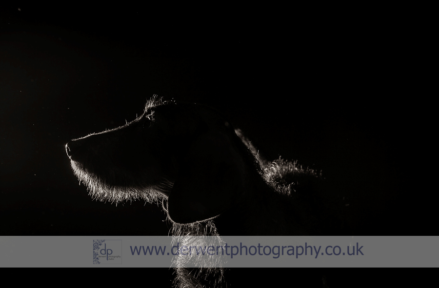 dog photography lake dstrict
