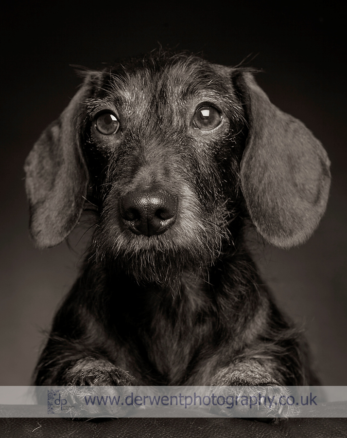 dog photographer lake district