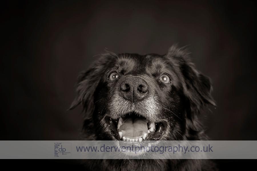 dog photography, studio portrait