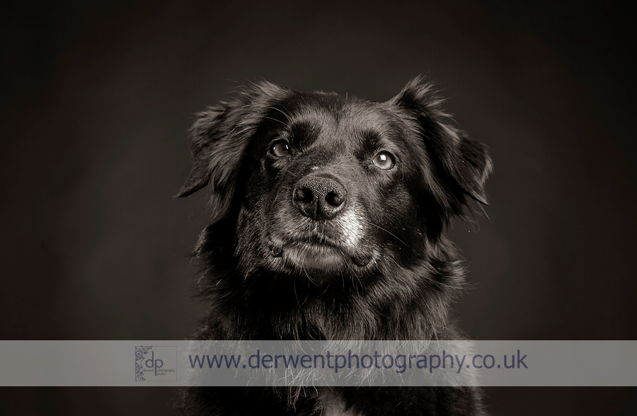 dog photography in the lake district