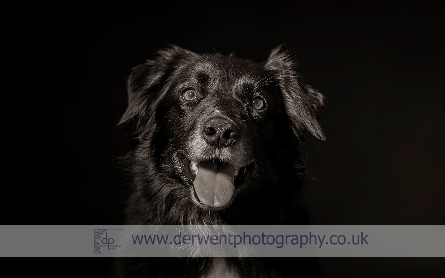 lake district dog photography